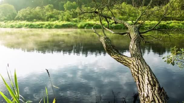 A folyó régi fa