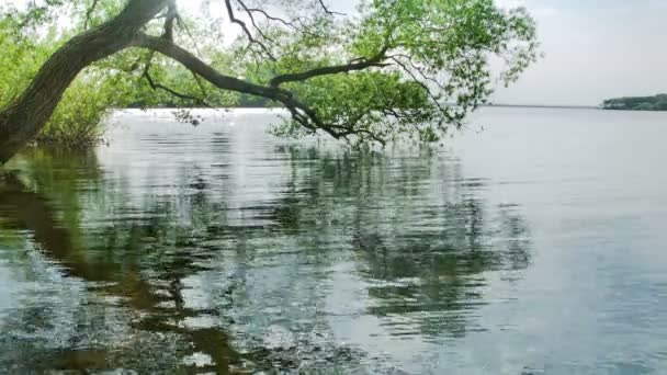 Tree On Lake With Waves