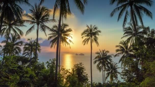 Tropické slunce s dlaněmi časová prodleva
