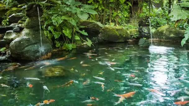 Jezírko s rybami a vodopády