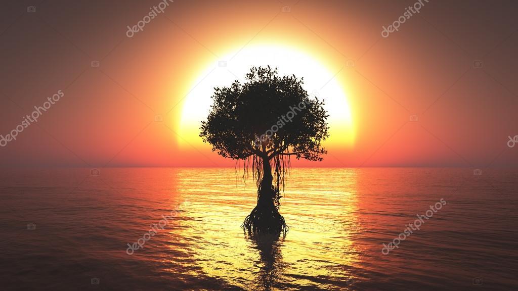 Mangrove tree on the sea sunset background