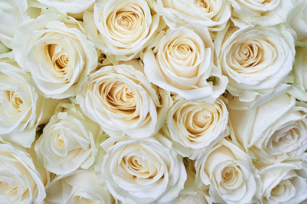weisse rosen hintergrund stockfoto photopotam 63876887. Black Bedroom Furniture Sets. Home Design Ideas