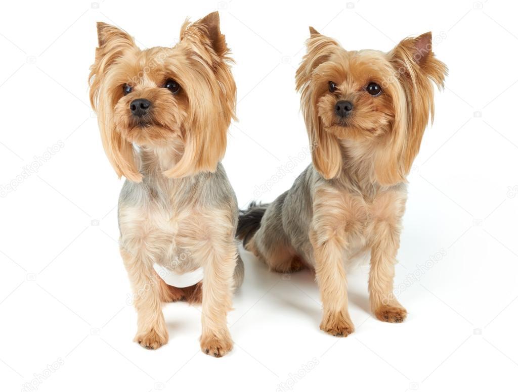 Precio de corte de pelo canino