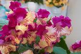 Pěkné domácí květiny