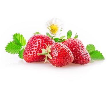 Shiny sweet strawberries