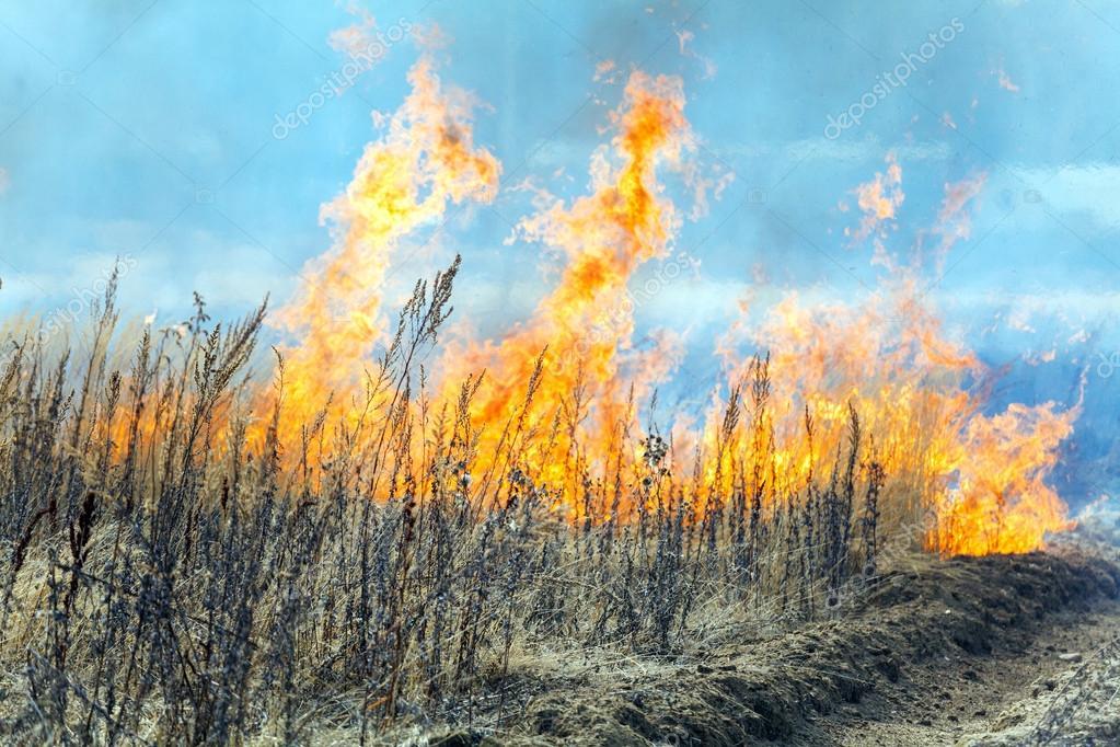 """Képtalálat a következőre: """"tűz a mezőn fotó"""""""