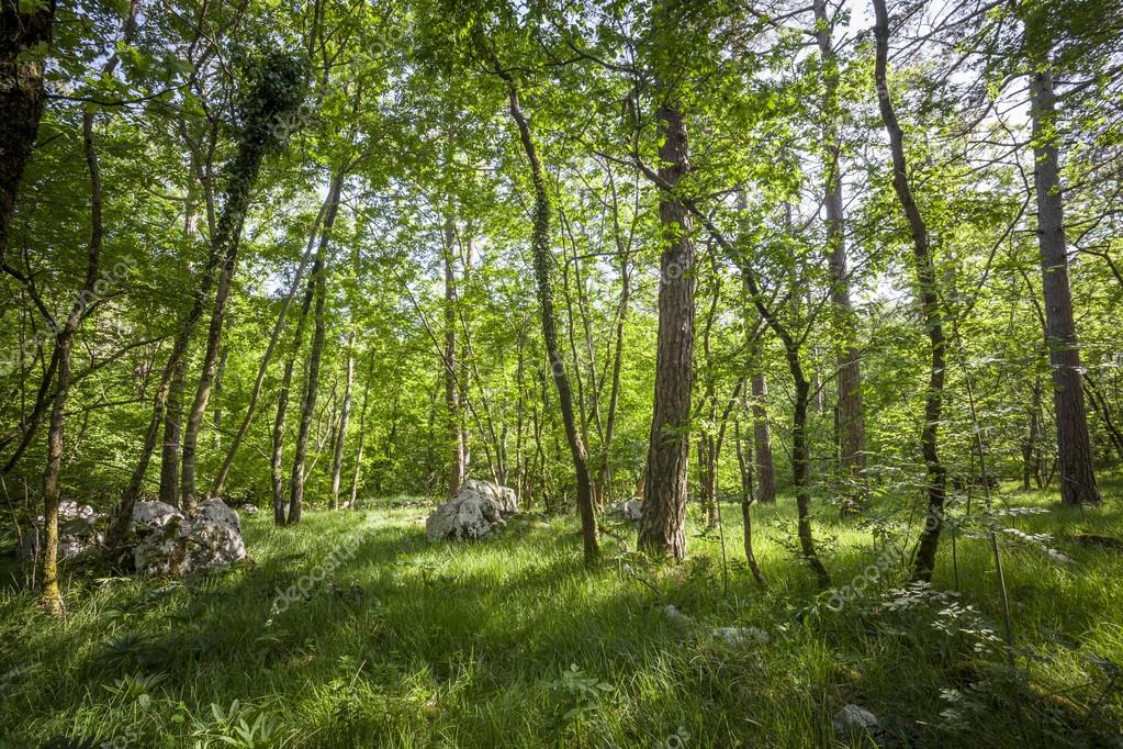Фотообои green forest in summer