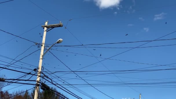 Flock of Birds Above Telephone Utility Lines