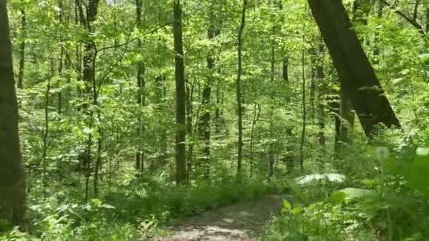 4k chůzi na cestě v lese 4375