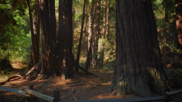 Vysoká Redwoods severní Kalifornii
