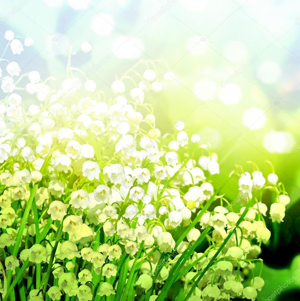 Eitelkeit Blumen Mai Ideen Von Frühling. Frühlings-landschaft — Foto Von Alenalihacheva
