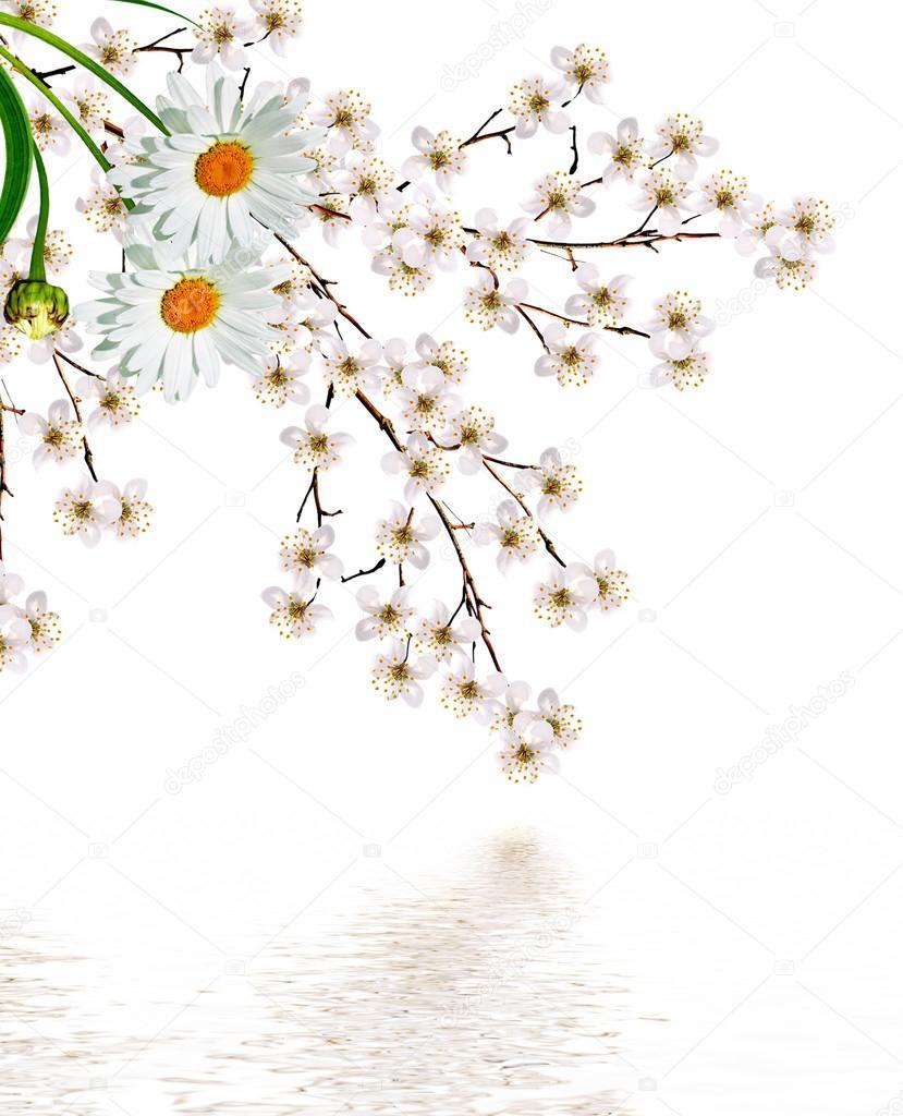 Branche De Fleurs De Cerisier Blanc Photographie Alenalihacheva