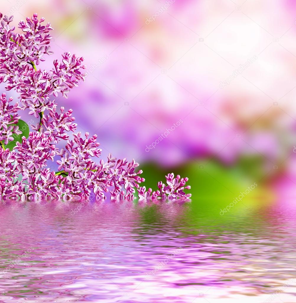Paisagem De Primavera Perfumado Ramo De Lilás Flores Lindas