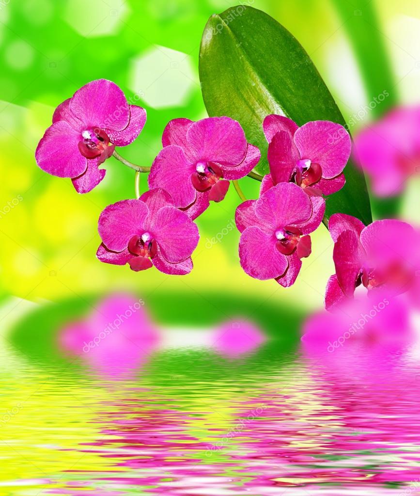 flores orquídeas coloridas hermosas flores de orquídeas foto de