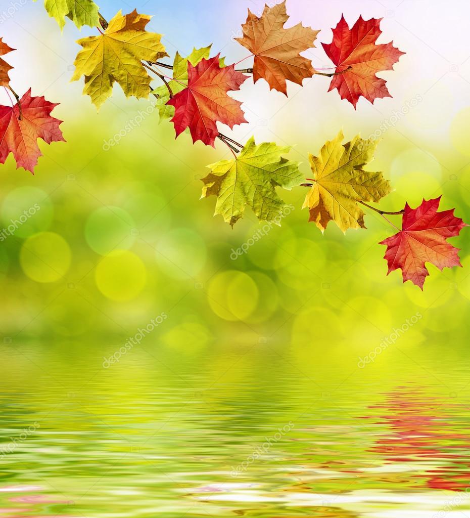Autumn landscape. Beautiful leaves. Colorful trees — Stock Photo ...