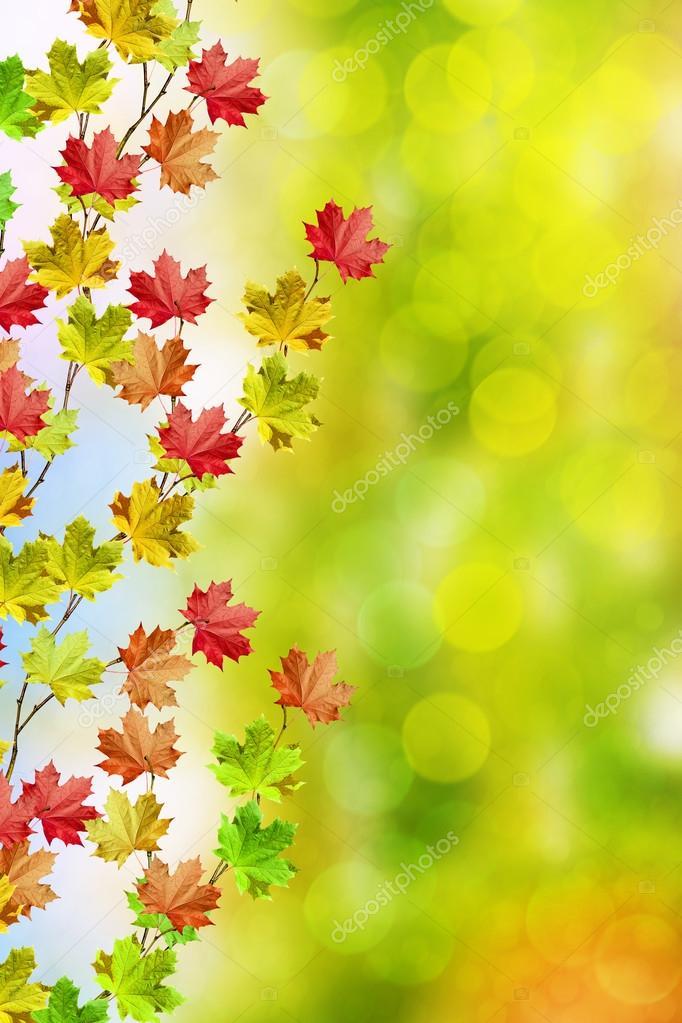 paisagem de outono folhas bonitas Árvores coloridas stock photo
