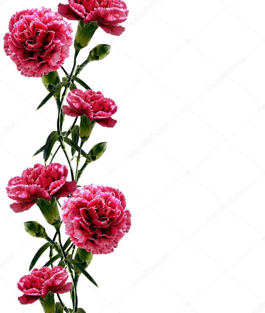 Доставка цветов  Купить цветы с доставкой в СПб