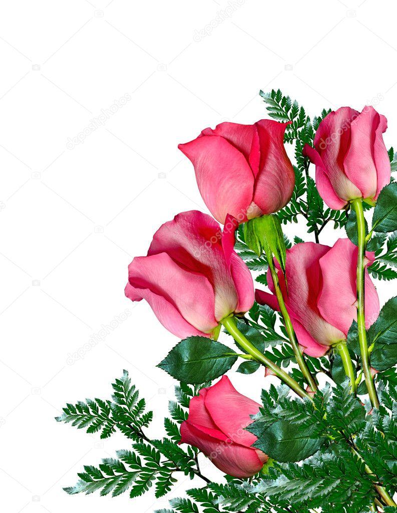 Rosas Rojas Sobre Fondo Blanco Fotos De Stock Alenalihacheva