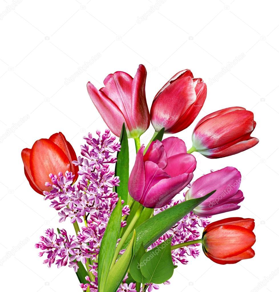 bilder blommor tulpaner