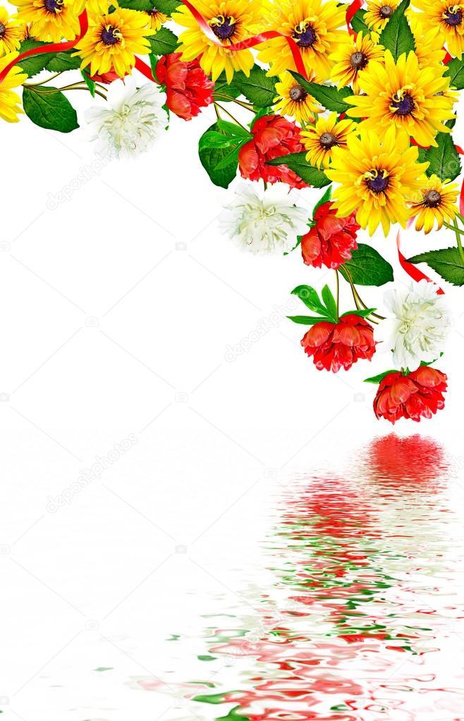 peony flowers isolated on white background. rudbeckia