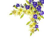 květiny lilie izolovaných na bílém pozadí. bluebel