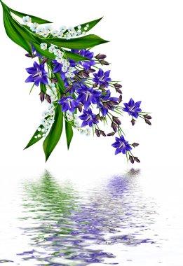 blue flowers campanula isolated on white background