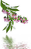 flowering plum and lily of the valley isolated on white backgrou