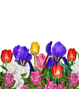 pink yellow tulips and blue irises