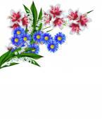 květiny lilie izolovaných na bílém pozadí