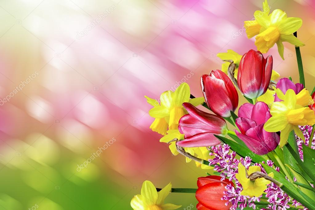 Spring flowers daffodils and tulips stock photo alenalihacheva spring flowers daffodils and tulips stock photo mightylinksfo