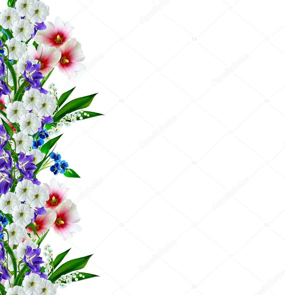 Flores De Malva Aisladas Sobre Fondo Blanco Fotos De Stock