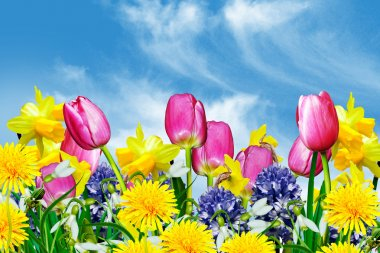 Spring flowers on a background of blue sky with clouds