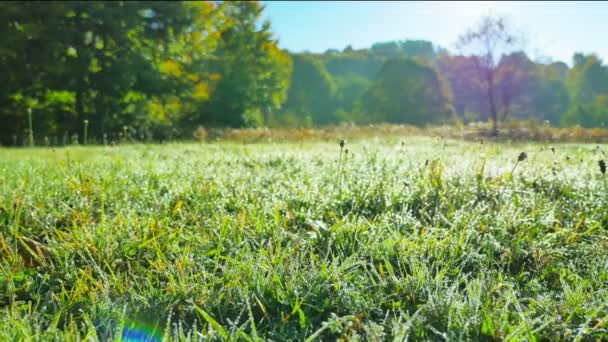 zelené trávě ranní rosou
