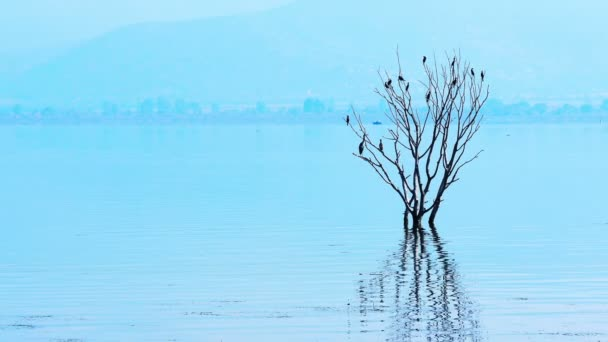 Blue serene landscape with lake and birds