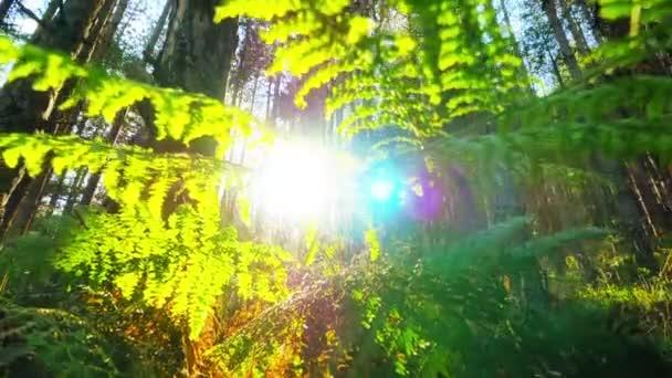 Les s sluneční paprsky zářící