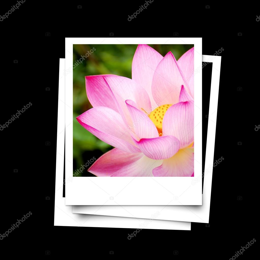 Photo frame of lotus flower isolated on black background