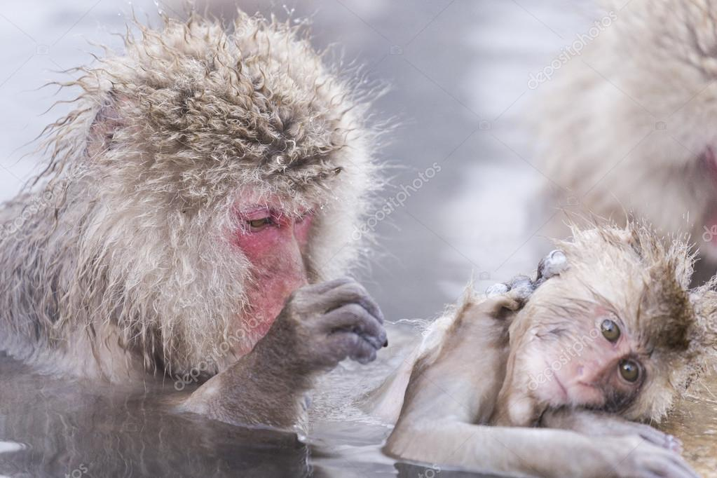Jigokudani snow monkey bathing onsen hotspring famous sightseein