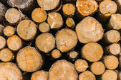 Fotografie stapel von brennholz