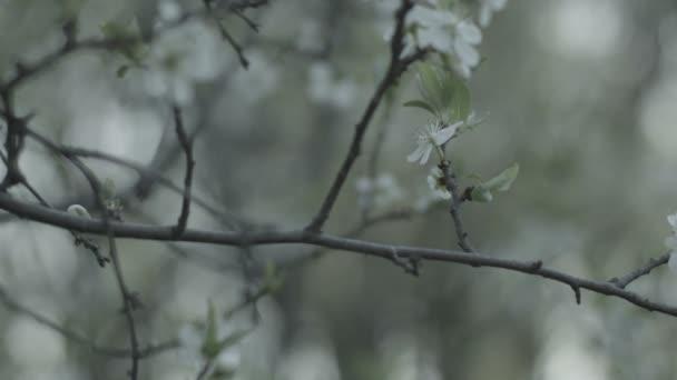 Jarní příroda, stromy na jaře