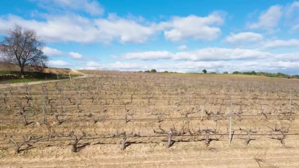télen egy metszett és díszített szőlőültetvény felett repülve, szunnyadó fázisban a szőlőültetvényekkel.