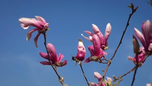 Větev Magnolie