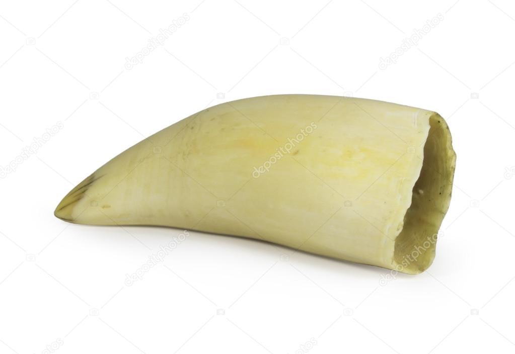 Dente Di Balena Complementi D'arredo