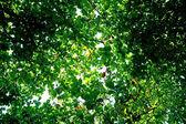 A zöld levelek háttér