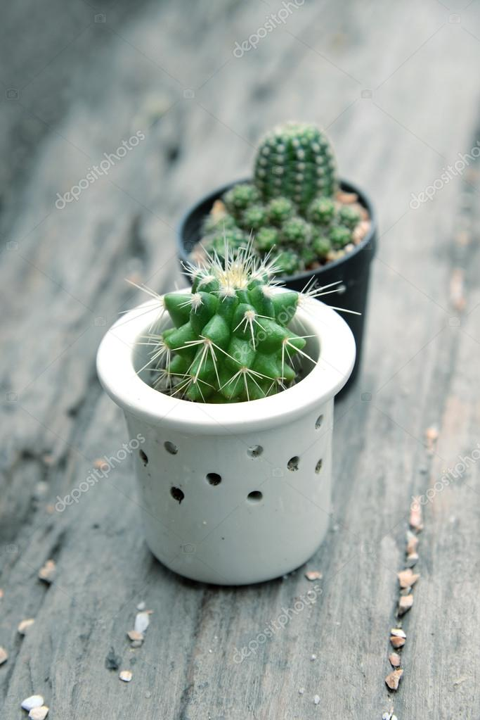 Cactus for decorated with retro tone