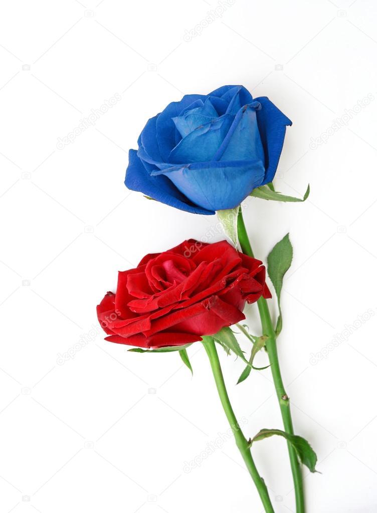 Rosas Rojas Y Azules Sobre Fondo Blanco Foto De Stock