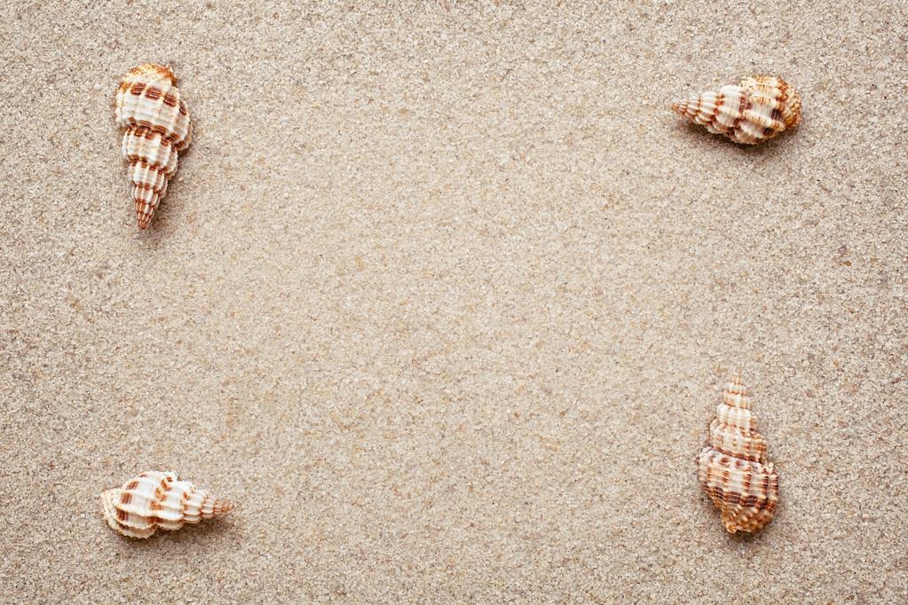 Marco de conchas de mar sobre la arena — Fotos de Stock © serkucher ...