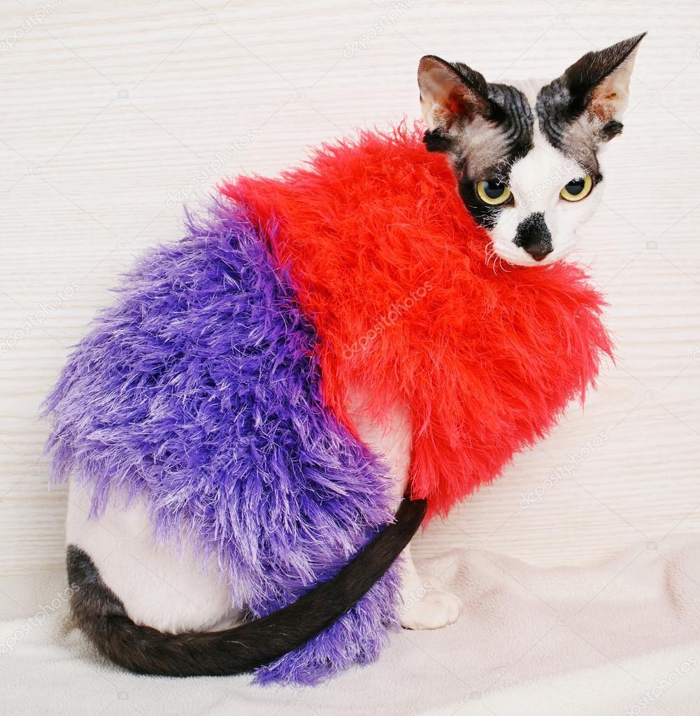 Sphynx Katzen tragen rot und lila pullover — Stockfoto © serkucher ...