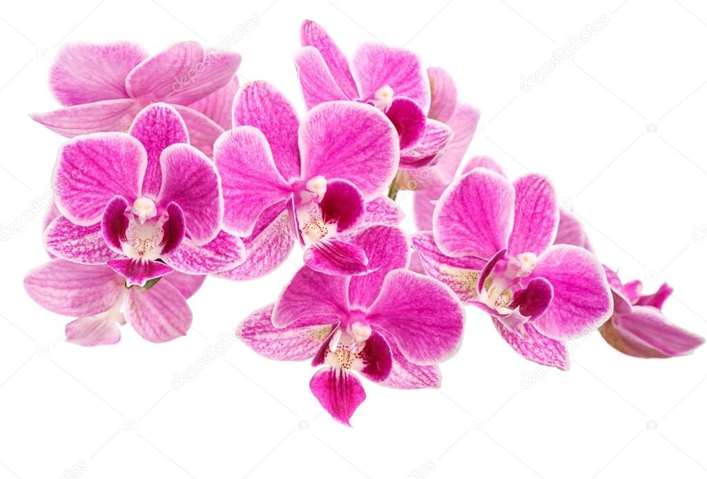 """Résultat de recherche d'images pour """"branches d'orchidées roses"""""""