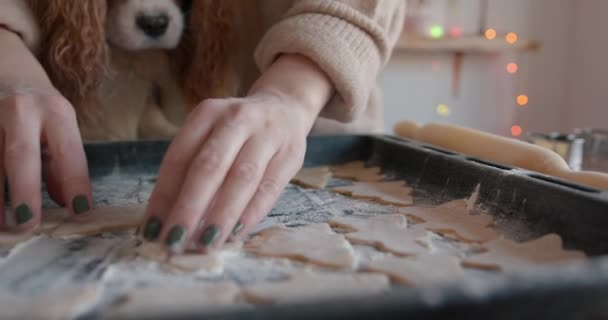 A cute spaniel dog sits at the table and looks at the gingerbreads on a baking sheet that a young woman cooking for Christmas