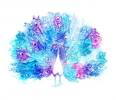 Beautiful Handdrawn Peacock bird consist many details.